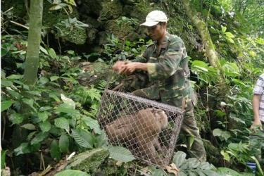 Thả động vật hoang dã về môi trường tự nhiên
